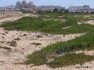 Playa La Mata (6)